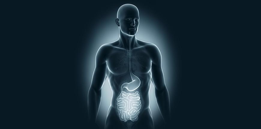 Intestino e saúde